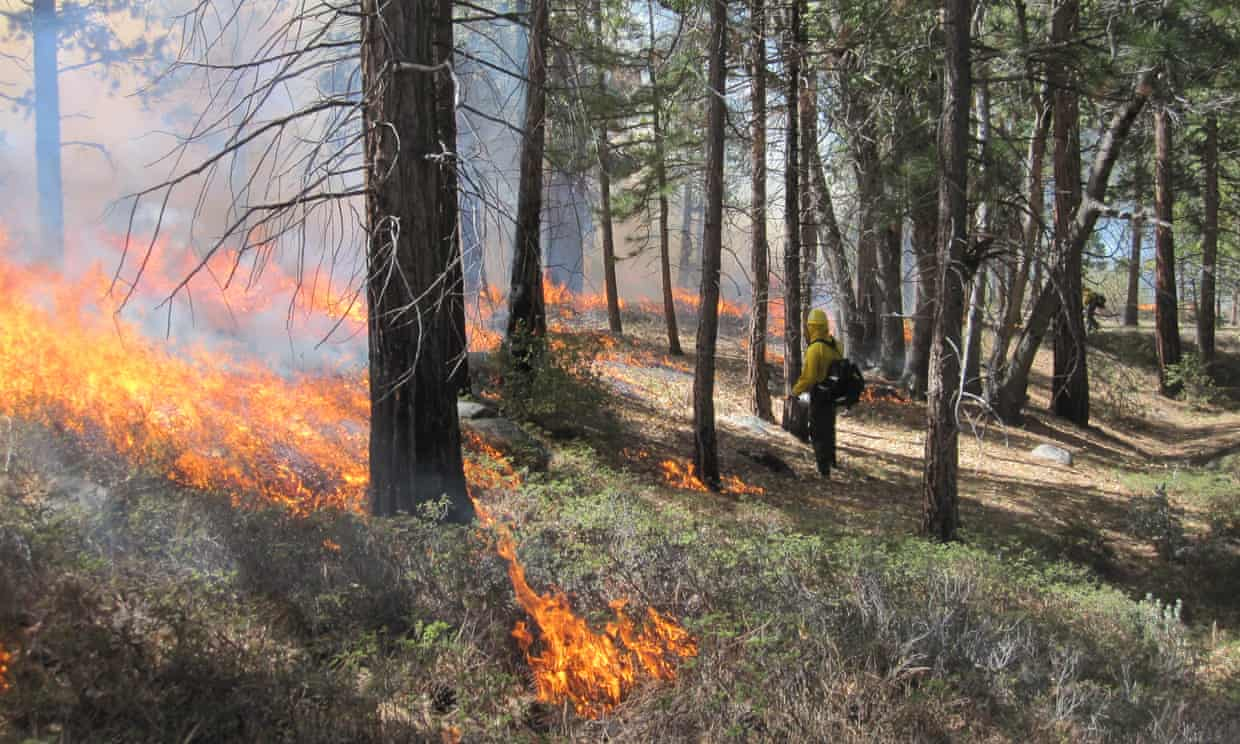A prescribed burn at Cedar Grove in California. Studies have shown how frequent fires reduce the levels of nutrients in soil. Photograph: Tony Caprio/Nature Ecology & Evolution