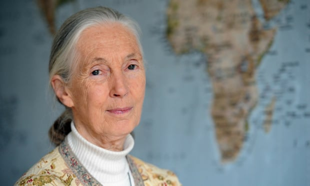 British scientist Jane Goodall: ' I have seen the result of climate change and we know, science has shown, that global temperatures are warming.' Photograph: Bertrand Guay/AFP/Getty Images