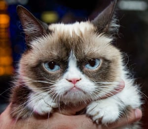Grumpy Cat in Las Vegas, America - 05 Aug 2014