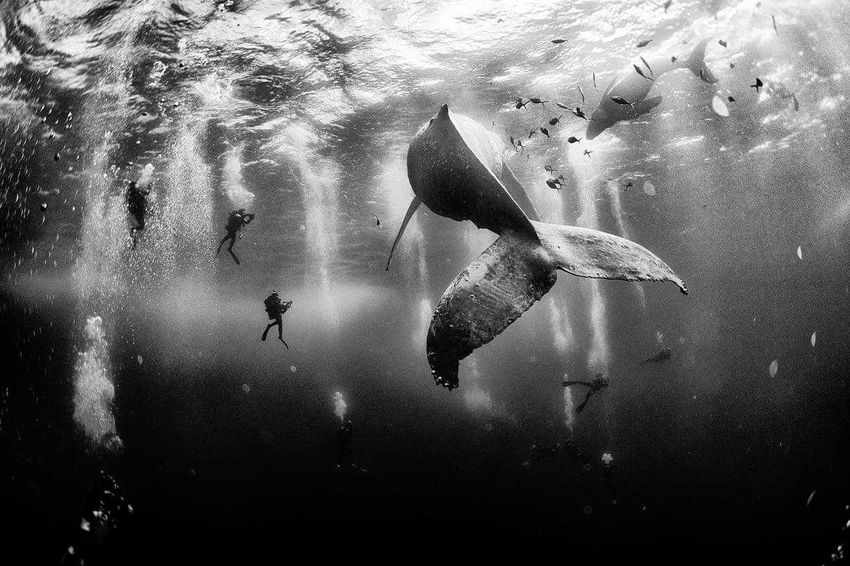 Il canto delle balene 1600