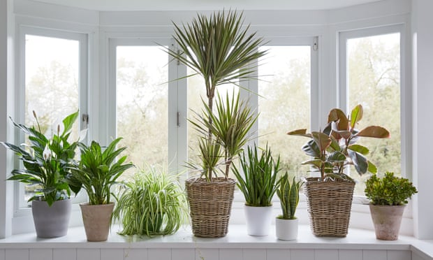 Don't worry, it may never happen ... houseplants get emotional. Photograph: Rob Streeter/Getty Images/Dorling Kindersley RF