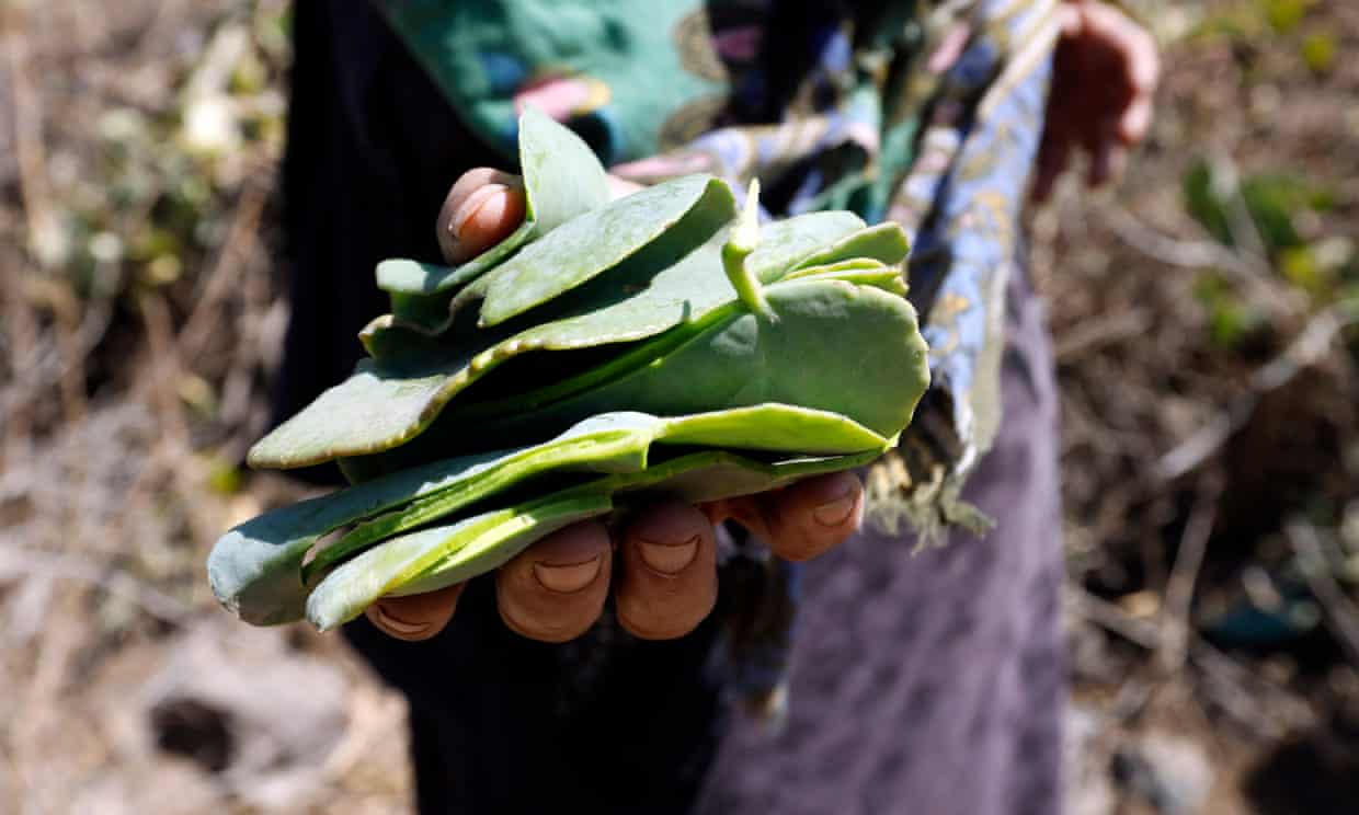 A Yemeni woman shows leaves she picked to use as a main meal in a mountain village. Photograph: Yahya Arhab/EPA