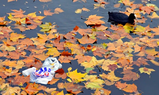 Plastic bag use in UK : Autumn leaves floating in water with Tesco bag and a duck