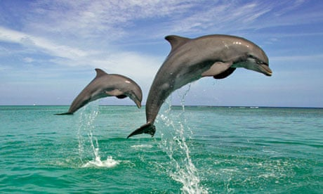 Swimming with dolphins something you want to do before it s too