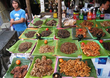 insects for food