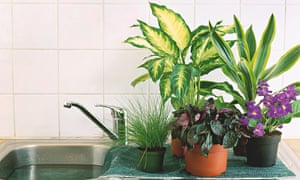 Alys fowler looking after plants in the holidays life and style the guardian - Indoor plants that require little care ...