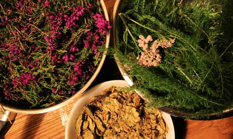 Heather, yarrow and hops - flavourings for heather beer. Photograph ...