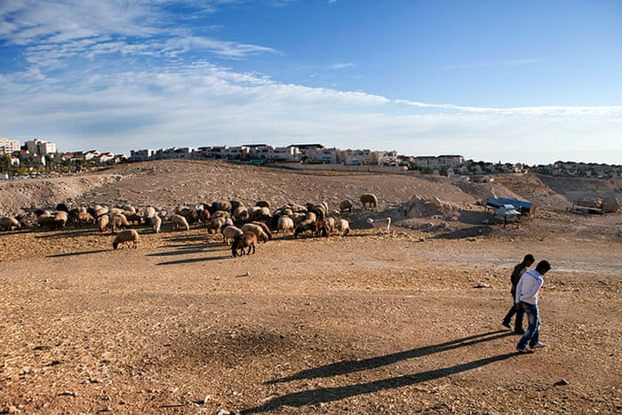 E1 project: Bedouins from the Jahalin tribe with their sheep near  Maale Adumim