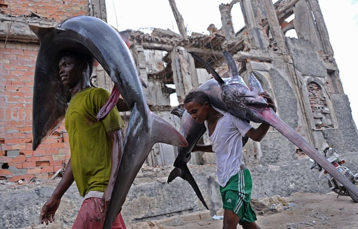 Hamarweyne, Somalia Porters carry the carcasses of a shark and a marlin to the local market