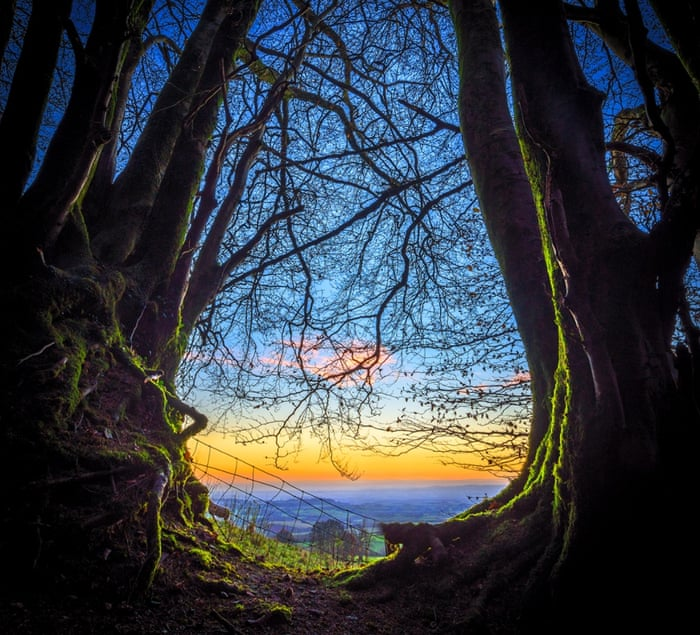Picturesque view of daybreak seen in the woods near Brompton Ralph village on December 03, 2014 in Somerset, England.