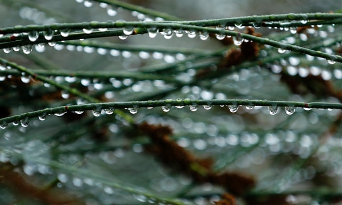 Rain drops hang from the stems of plants along a garden pathway in Escondido, California December 3, 2014. A major Pacific storm that broke records across Southern California as delivered a small measure of relief to the drought-stricken state. .
