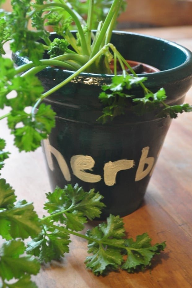 Homemade herb pot
