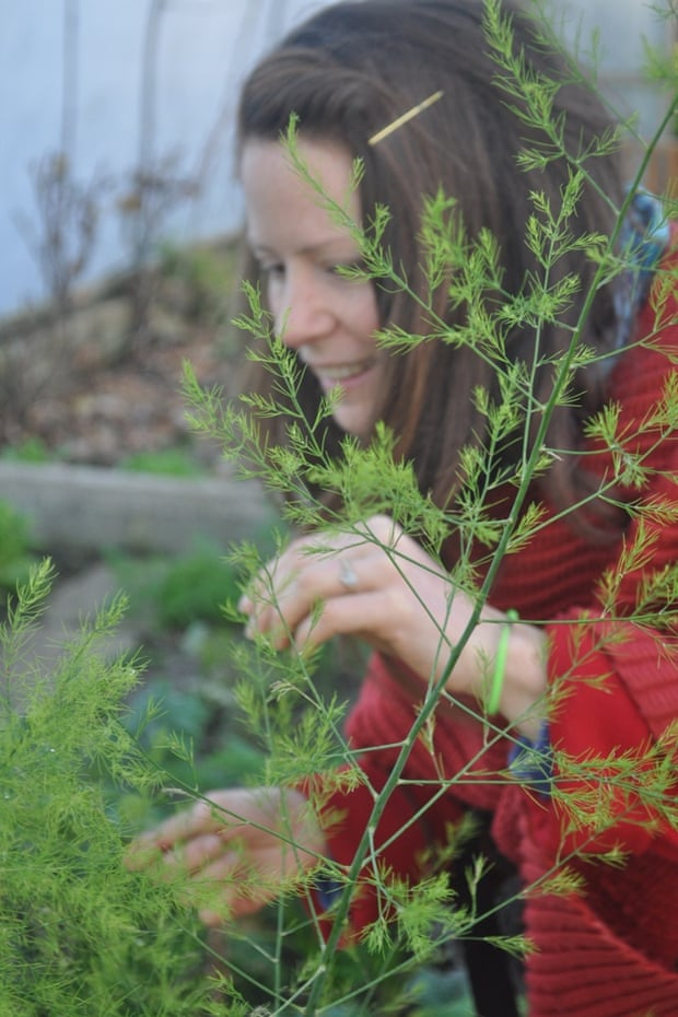 Joanne picking asparagus foliage
