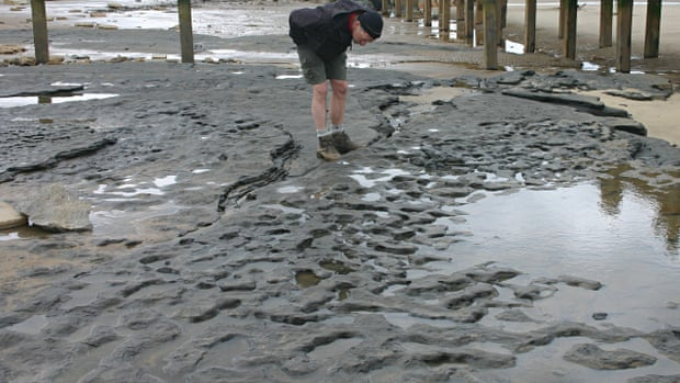 850,000-year-old human footprints found in Norfolk  Footprint-hollows-on-the--004