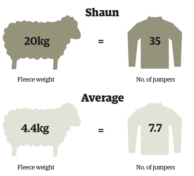 sheep graph