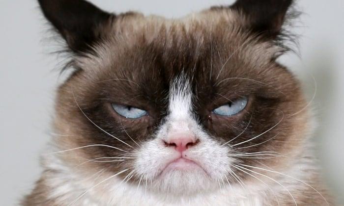 Grumpy Cat likes Pittsboro Parks