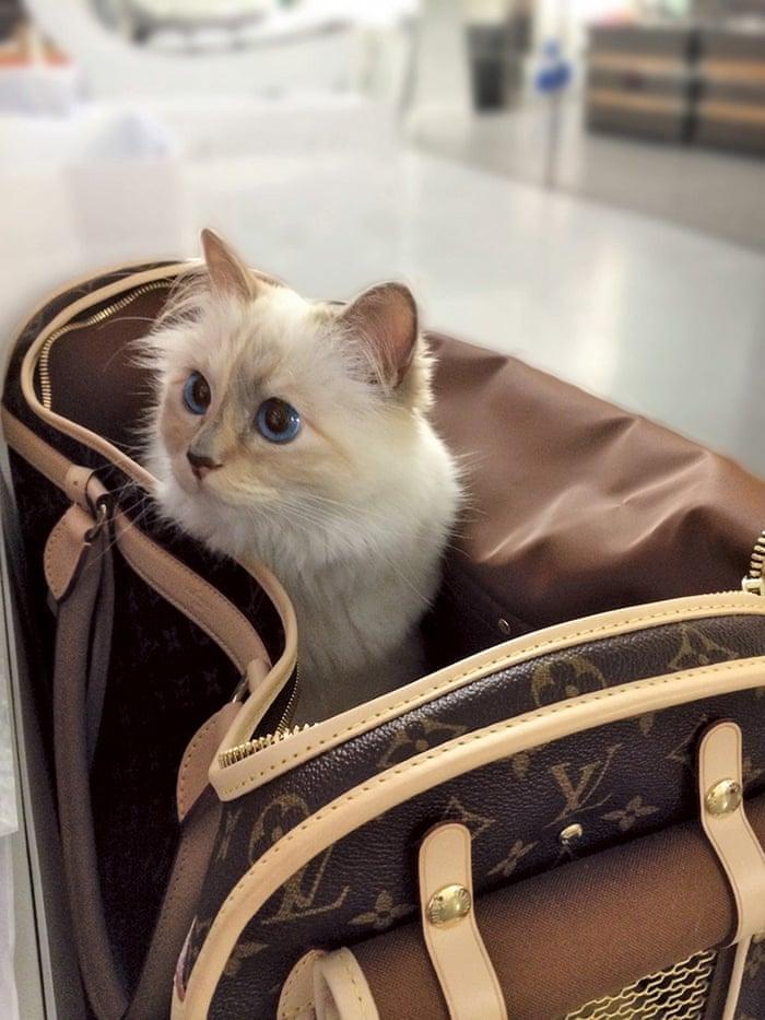 Choupette Kucing Bertuah