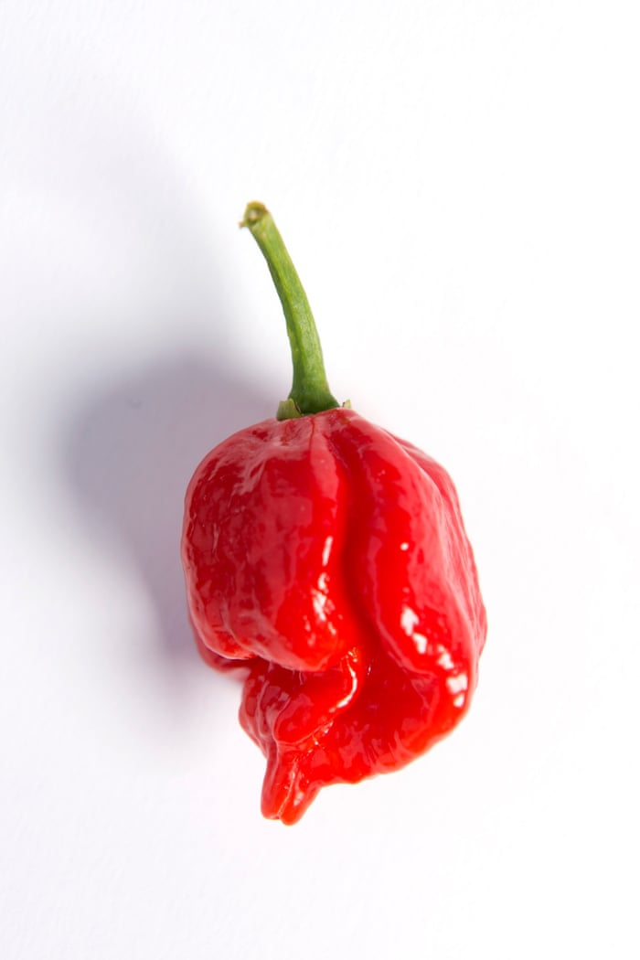 0442f882-b2ec-43b9-818a-6255804270be-1360x2040 - Hottest chillies in the world, 2015 - Facts and Trivia