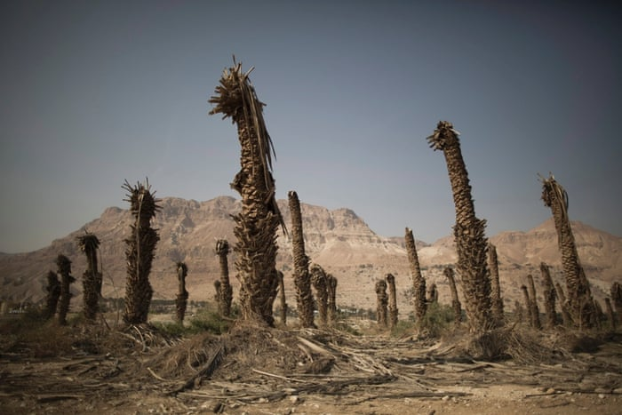 Dead palm trees stand in front of the Dead Sea coastal resort near Ein Gedi, Israel, 2 December 2014. According to media reports the Dead Sea water level is dropping with an average of one meter per year since the first water level measurements in 1927.