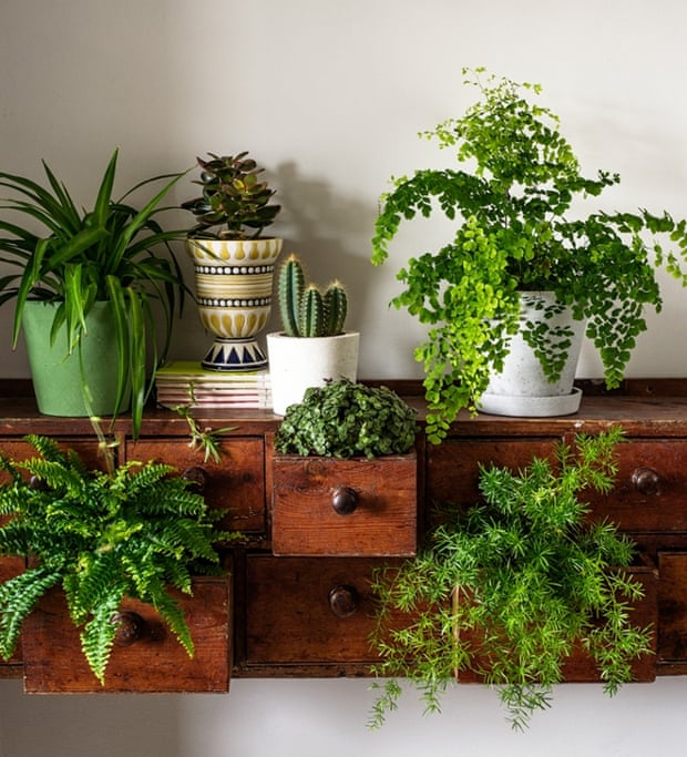 How to make the most of house plants  Life and style  The Guardian