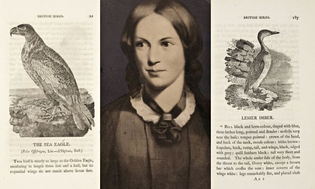 'With Bewick on my knee, I was happy' … Charlotte Brontë and pages from British Birds. Photograph: Getty/Bernard Quaritch