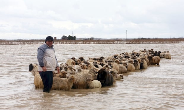 A man stands with his flock of sheep in floodwaters in the village of Darzez near the city of Fier on 2 February 2015. Soldiers were deployed in Albania on Monday to help rescue villagers and strengthen flood barriers .