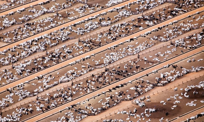 Industrial livestock production in Brazil