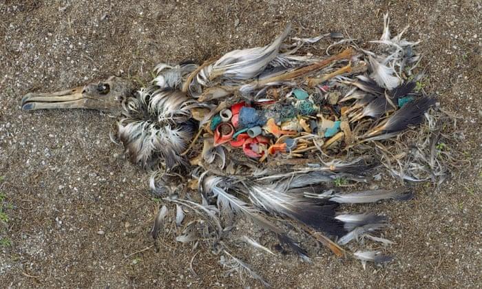 Pássaro inoperante: