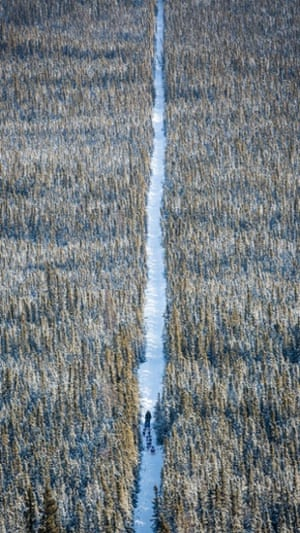 A musher follows a team of dogs through the forest between Nenana and Manley Hot Springs