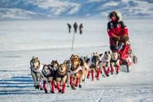 Aliy Zirkle mushes into the Unalakleet checkpoint in second place. Aaron Burmeister was the first musher to reach Unalakleet, the first checkpoint on the Bering Sea coast