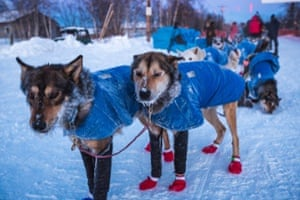 Mitch Seavey's lead dogs have frosty whiskers at the Huslia checkpoint
