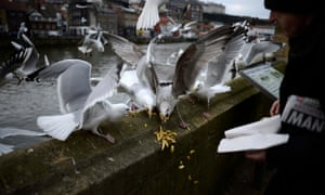 The government is targeting seagulls, which campaigners say have become a scourge on British towns and cities.