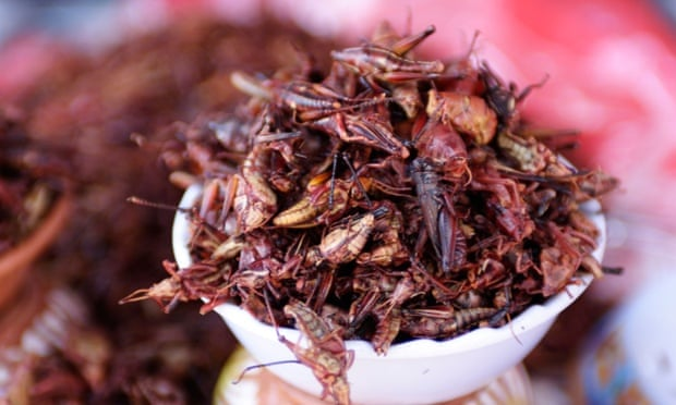 Grasshoppers fried in chillis. But what vintage should you go for?