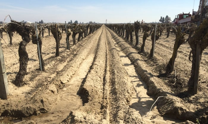 Baked earth at Clarence Freitas' farm, outside Fresno. Photograph: Rory Carroll/the Guardian