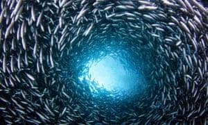 WWF ocean report