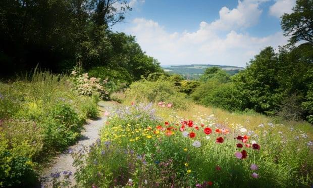 Wild meadow with flowers in Buckland Monochorum Devon.