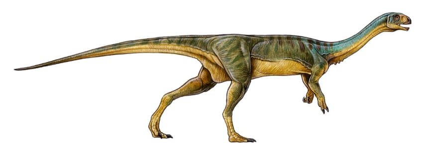 Rather than the sharp teeth, large head and thick neck of its meat-eating cousins, Chilesaurus had a horny beak, flatter teeth for chomping plants, a small head and slender neck.