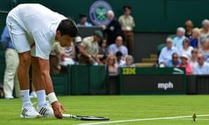 Novak Djokovic meets the bird