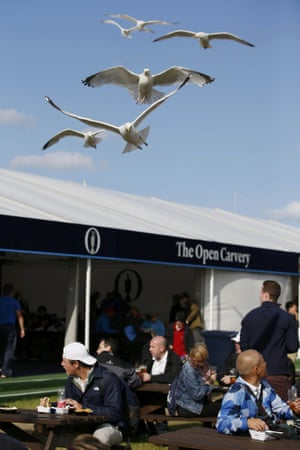 Seagulls hover over spectators as they eat at the course.