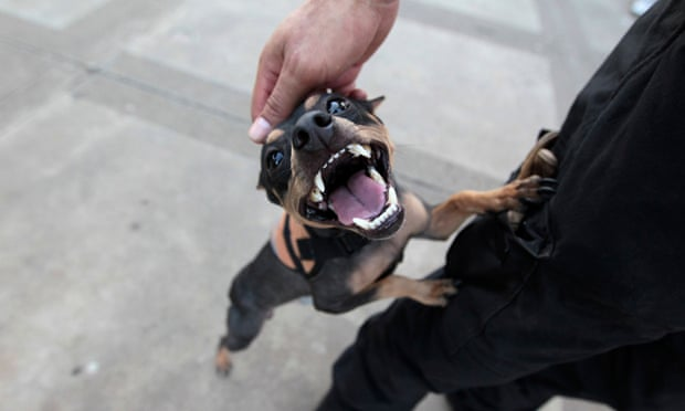 A man plays with his dog.
