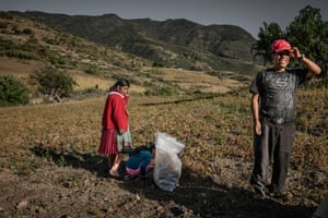 A family from the Zapotec indigenous group collect a meagre harvest from desiccated frijoles (beans), as the dry season quickly advances in the foothills of the Sierra Norte Mountains in Oaxaca