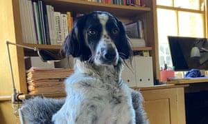 Dispensing wisdom … Greka the dog.