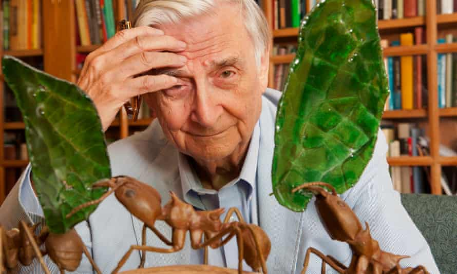 EO Wilson: perhaps he should have stuck to his core subject.