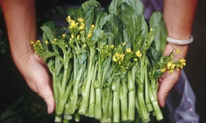 A woman holds a bunch of green Bok-Choi vegetables
