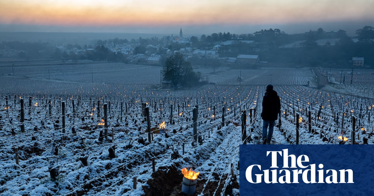 French winemakers count cost of 'worst frost in decades'