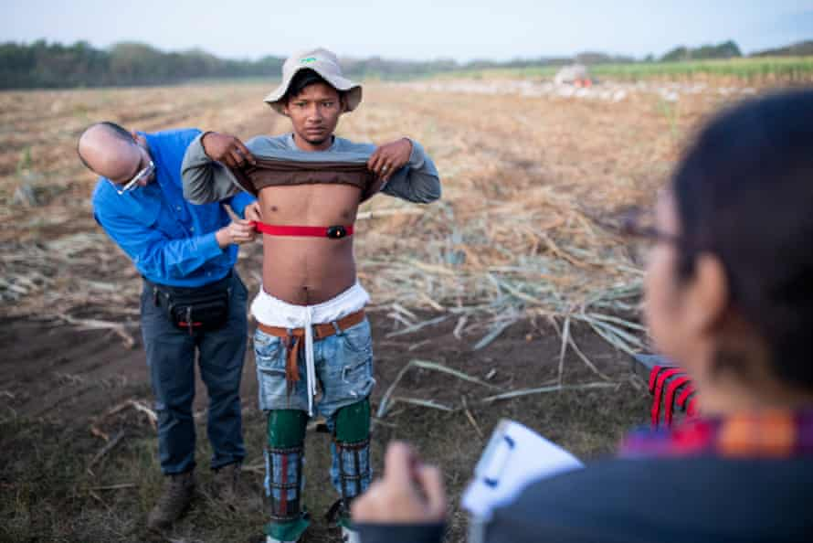 Sugar cane workers getting heart rate monitors, working in the fields and taking their rest