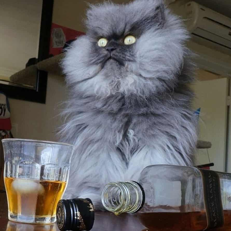 Colonel Meow was dubbed 'the world's angriest cat'.