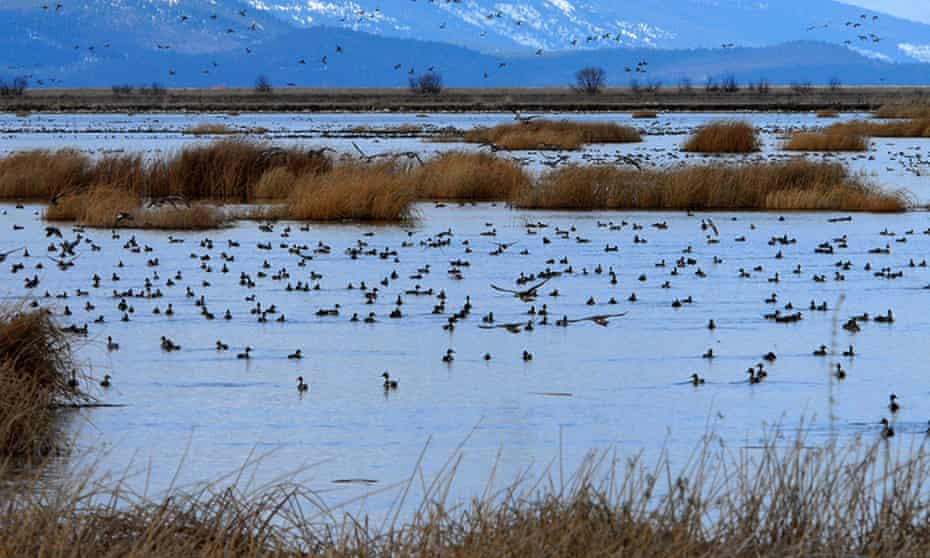 Environmentalists say the move would allow damage of wetlands that prevent flooding, filter pollutants and provide habitat for a multitude of wildlife.