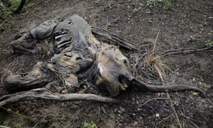 A victim of poachers in Kenya: elephants are among the species most impacted by humans, the WWF report found.