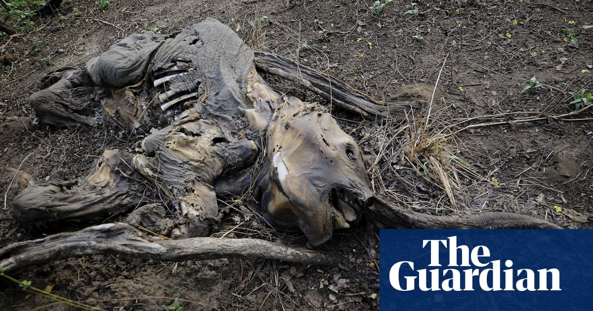 world on track to lose two thirds of wild animals by 2020 major